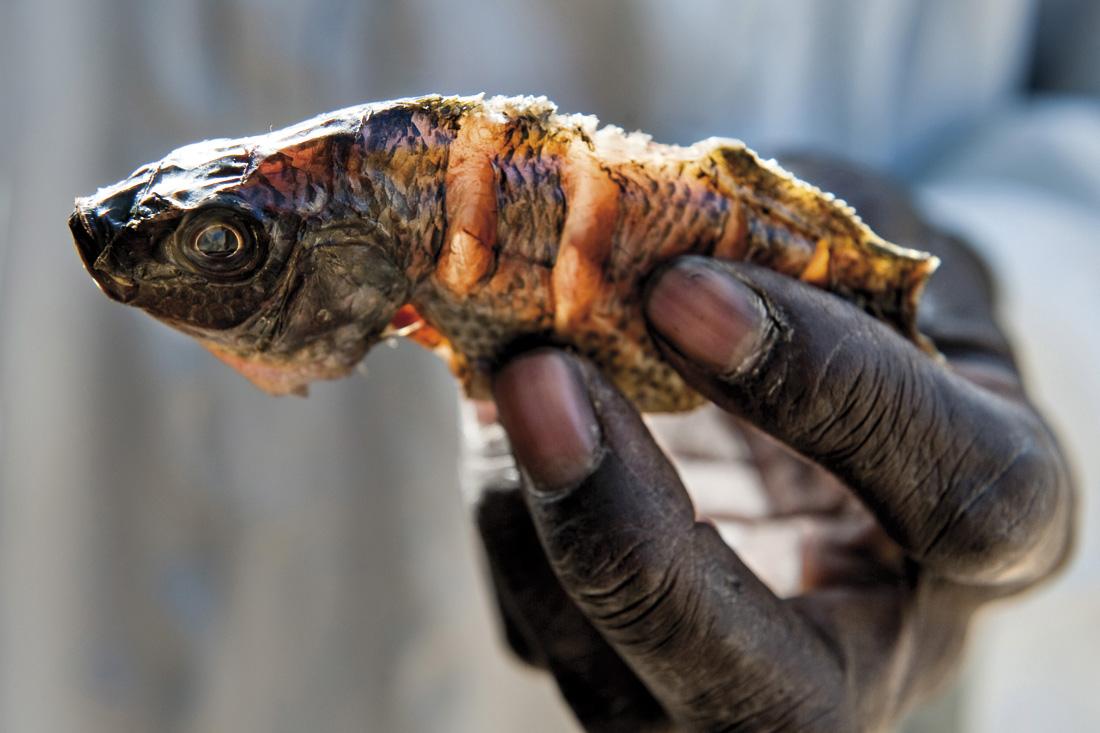 Pez pescado en el lago Chad / Fotografía: Getty Images